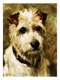 Portrait of a Terrier: Darkie  1903