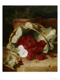 Raspberries in a Cabbage Leaf Lined Basket with White Convulus on a Stone Ledge  1880