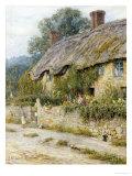 Cottage Near Wells  Somerset