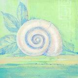 Tranquil Seashell III