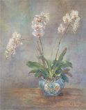 Orchid Heirloom II