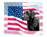 US Patriotic Lab