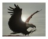 Montana Eagle