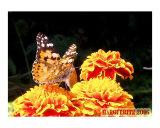Butterfly Alone