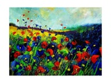 Red and blue poppies