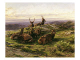 Stags at Rest