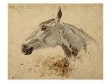 Testo Di Cavallo