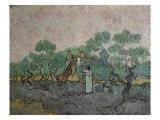 The Olive Pickers, Saint-Remy, c.1889 Giclée par Vincent Van Gogh