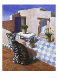 Cat of Morocco (Chat Du Maroc)