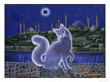 Angora Cat  Istanbul