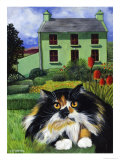 Persian Cat in Ireland (Chat Persan En Irland)