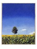 Landscape in Perugia