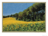 Sunflowers in Perugia