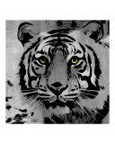 B/W Tiger