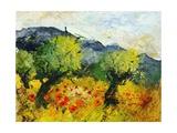 Olive trees 45