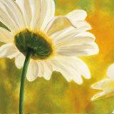 Marguerites dans le Soleil I