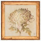 Chrysanthemum Floret