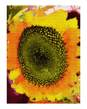 Single Sunflower Oil Painting by Sharon Snead