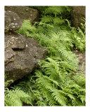 Stone Ferns