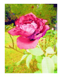 Red Rose Watercolor by Sharon Snead