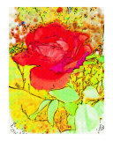 Red Rose Splash Painting by Sharon Snead