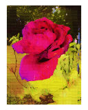 Red Rose Oil Painting by Sharon Snead