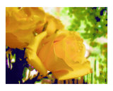 Yellow Rose Watercolor by Sharon Snead