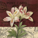 Postcard Lily