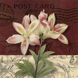 Postcard Lily
