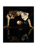 Narcissus  C1597-99