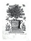 Ornamental Tree in an Urn on a Small Stage