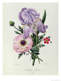 Iris  Anemone and Geranium