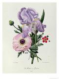 Iris  Anemone and Geranium