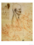 Anatomical Studies  circa 1500-07