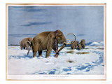 Troop of Mammoths in the Ice Age