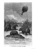 "The Hippopotamus  Illustration from ""Five Weeks in a Balloon"" by Jules Verne Paris  Hetzel"