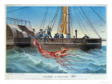 The Giant Squid Caught by the Alecton off the Coast of Tenerife  30th November 1861