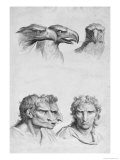 Similarities Between the Head of an Eagle and a Man