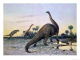 Prehistoric Animals: a Laelaps Attacking a Brontosaurus