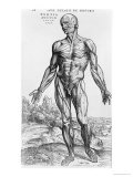 "Anatomical Study  Illustration from ""De Humani Corporis Fabrica""  1543"