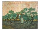 The Olive Pickers  Saint-Remy  1889 (Oil on Canvas)