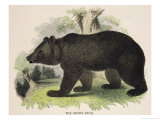 The Brown Bear  Educational Illustration Published by the Society for Promoting Christian Knowledge