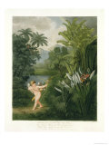"""Landscape with Cupid Aiming an Arrow at a Parrot or Queen Flower  from """"The Temple of Flora"""""""