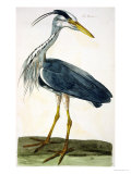 "The Heron Plate from ""The British Zoology Class II: Birds"""