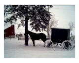 Amish Horse and Buggy in Winter