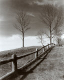 Fences and Trees  Empire  MI