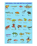 Amphibian  Fish and Reptile Alphabet