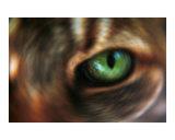 Hypnotic Cat's Eye