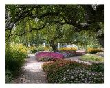 A Portsmouth Garden