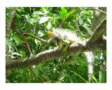 Wildlife in the Tropics